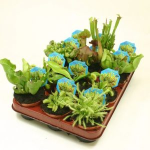 Carnivorous Plant Mix