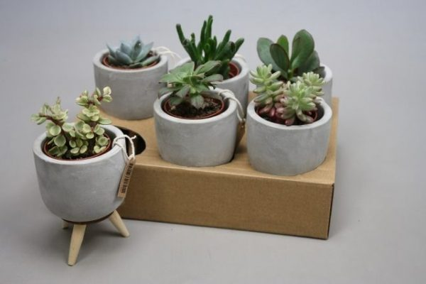 Succulent mix in concrete pot on wooden legs