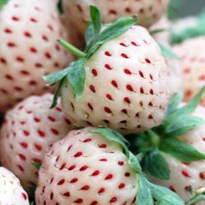 Fragaria x ananassa 'Pineberry'