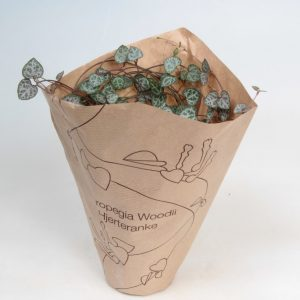 Ceropegia woodii (String of Hearts) in 9cm Pot