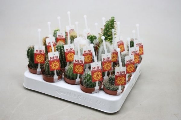 Cactus Mix Label and Picker